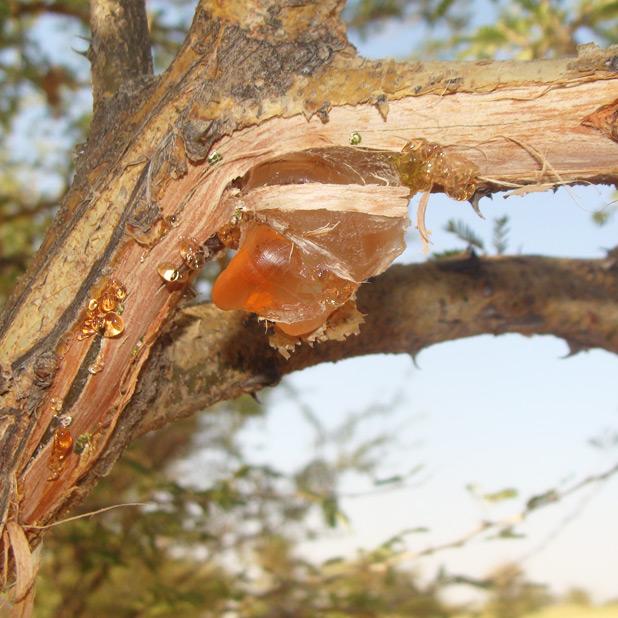 世界の林業(3)〜アフリカ・ス...